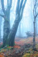 mysterious path by EdinaBaltas
