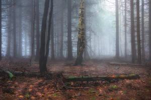 dark woods by EdinaBaltas