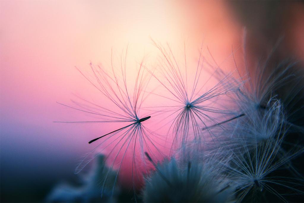 angel feather... by edinaB