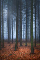 forest of mysteries... by EdinaBaltas