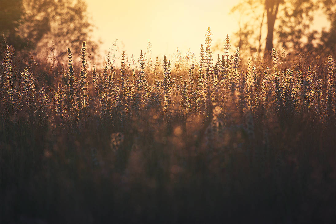 golden meadow... by EdinaBaltas
