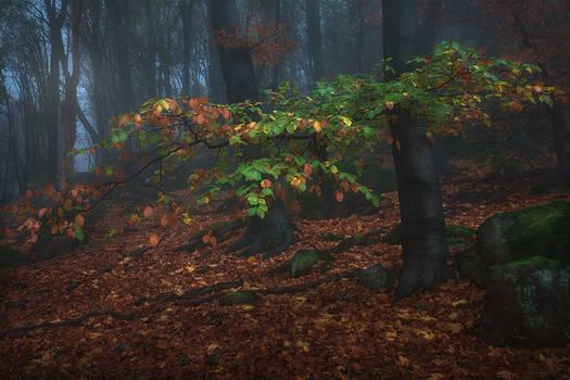 spring to autumn...