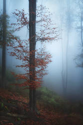 forest of lost souls...