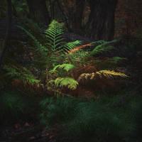 forest fantasy...