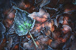 winter's breath... by EdinaBaltas