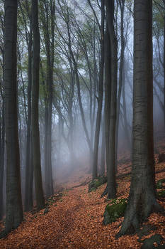 path into the mist...