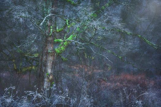 frosty silence...