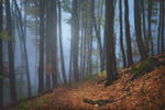 forest symphony...