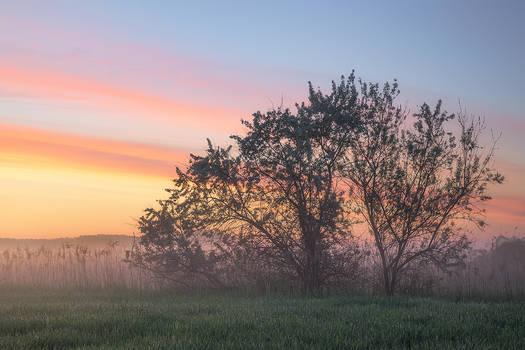 dawn of wonders...