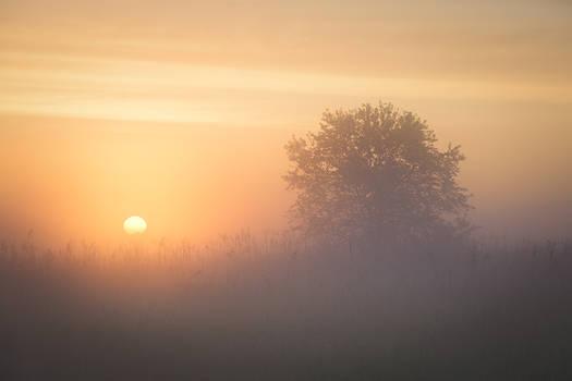 dawn of wonders - illumination