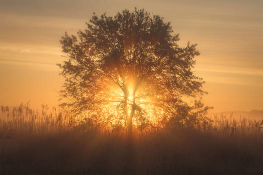 dawn of wonders - shine