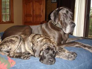 Logan and Rosie