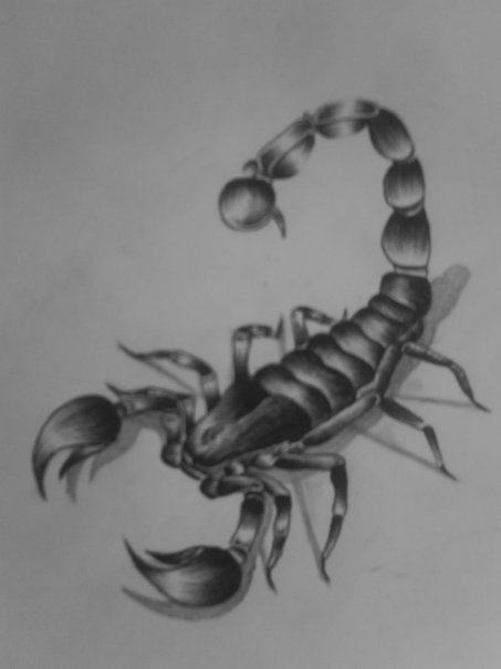 scorpion by Midnight18th