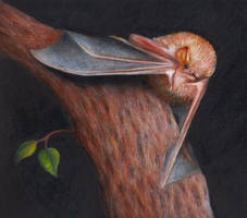 Red bat by shanskala