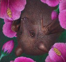 Blossom by shanskala