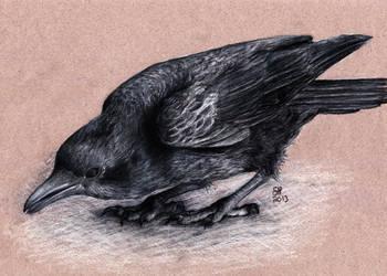 Crow by shanskala
