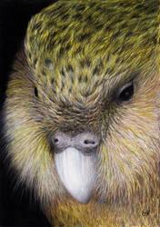 Kakapo by shanskala