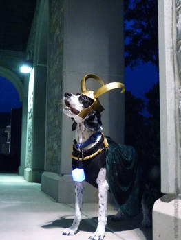 KNEEL BEFORE YOUR DOG.