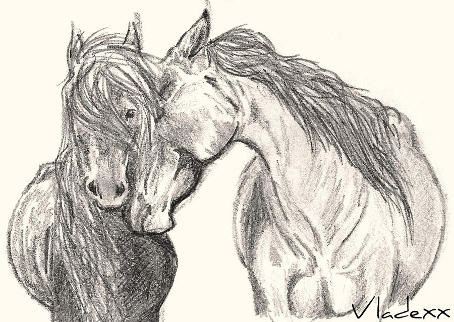 wild horses drawing photo5
