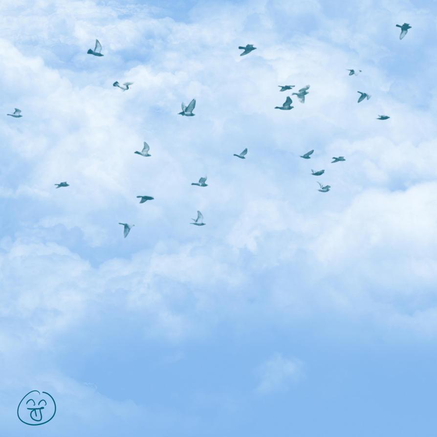 Birds flying in the sky - photo#2