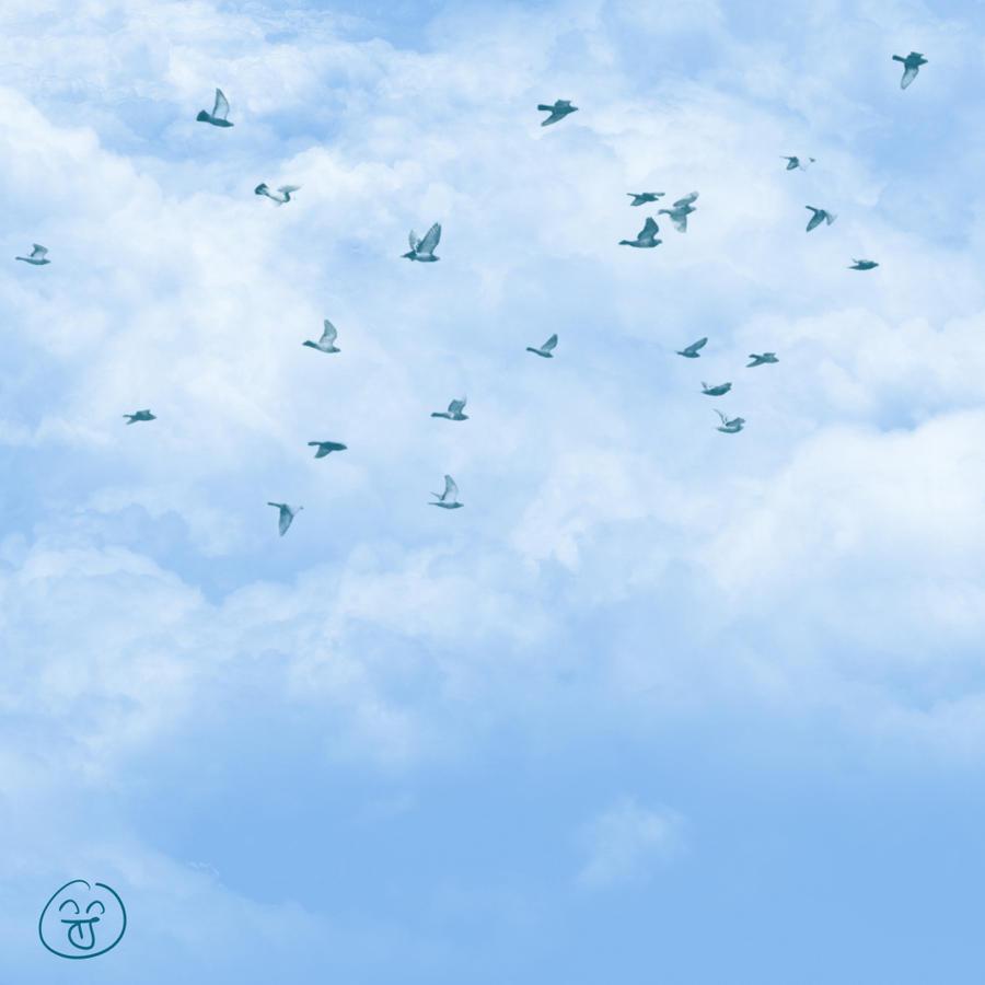 Birds  khandronet