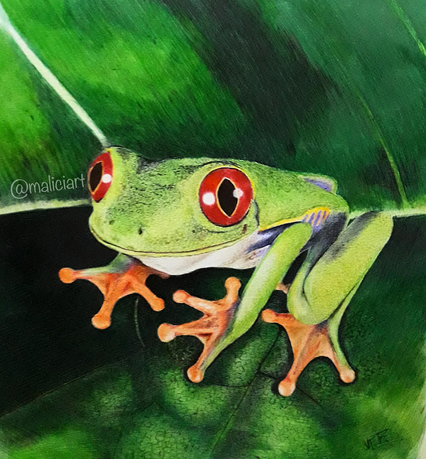 Frog by AirFR