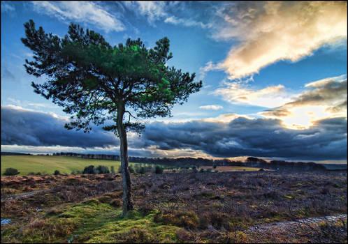 Quantock Tree by EllieEllis