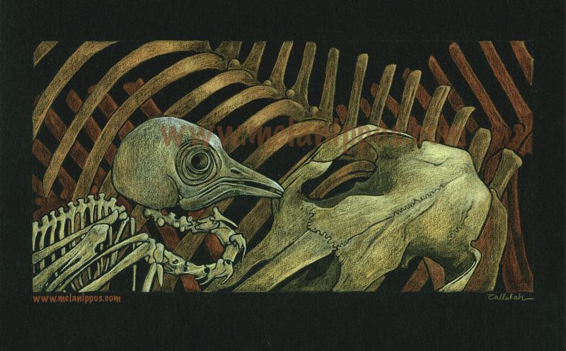 skeleton study by melanippos