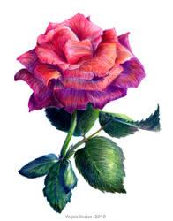 Flower by VirginieSiveton