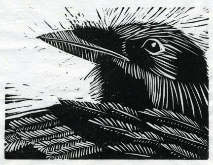 Raven by puffbird