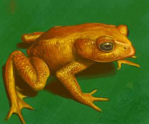 Frog study by WillWarburton