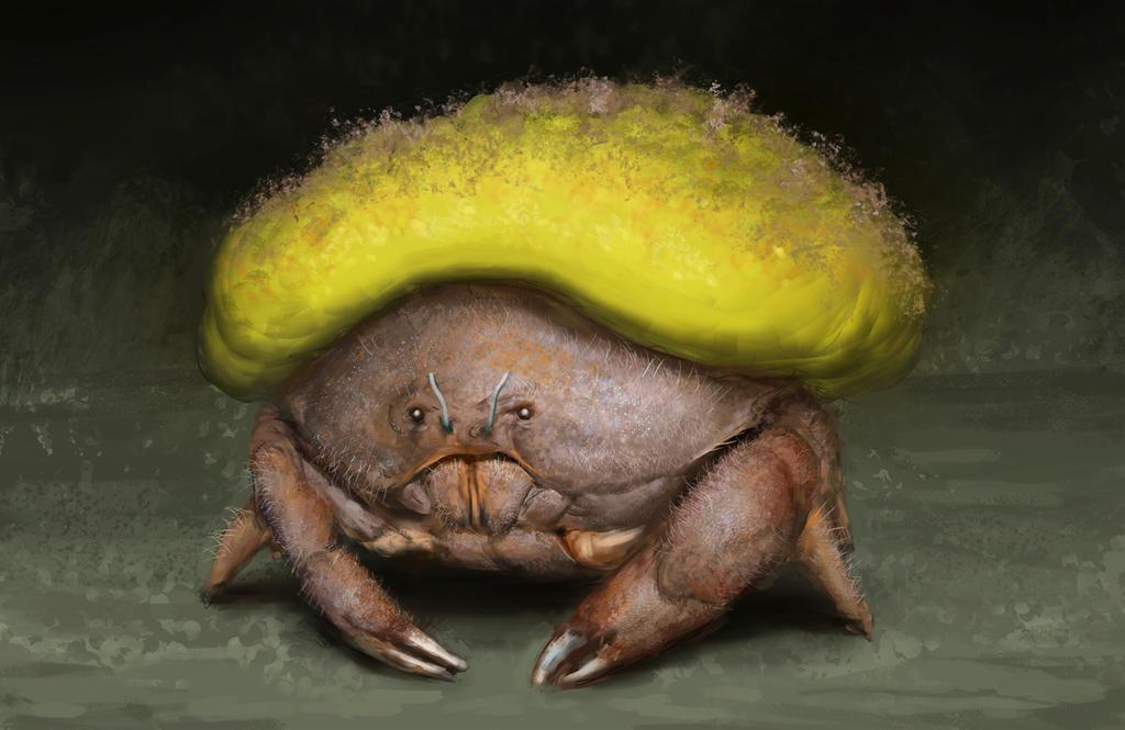 Sponge Crab by WillWarburton