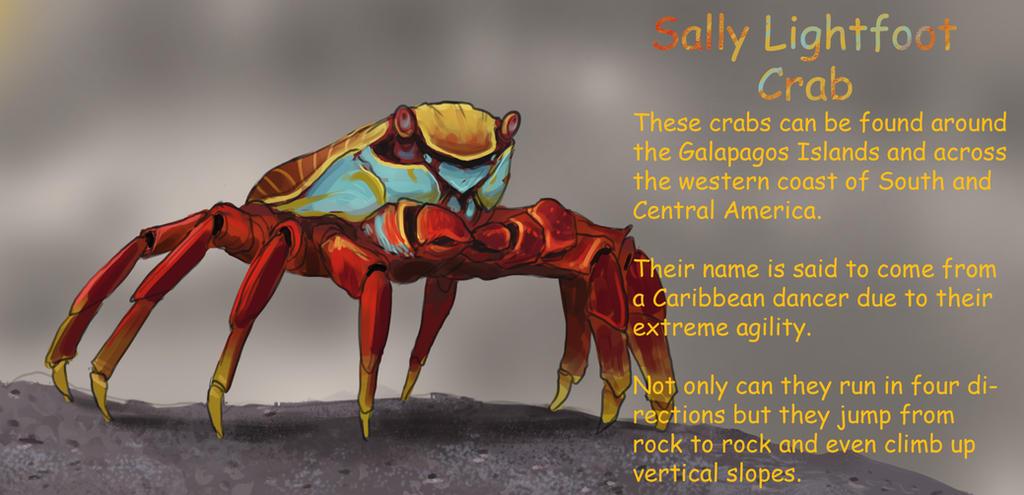 Sally Lightfoot Crab by WillWarburton