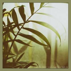:: Bergpalme :: by Phantom-of-light