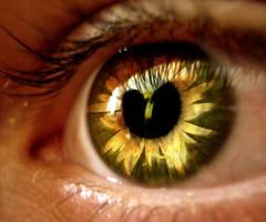 Flower eye by FLixter