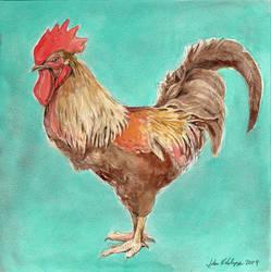 Rooster by JohnKohlepp