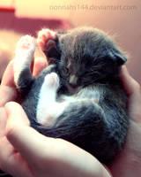 high five kitty by nonnahs144