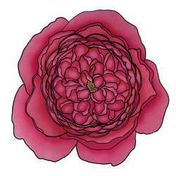 Single Rose by cindyb399