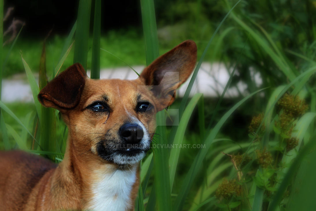 Little dog in dream long grass by EllenRaab