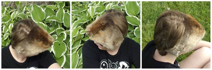 *Updated* Pathological Beaver Mask For Sale