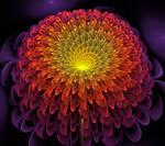 Cosmic Chrysanthemum