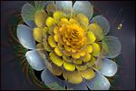 Radiant Blossom of Light