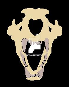 Wolf skull by Eriktayl0r