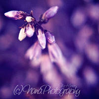 Purple by NanaPHOTOGRAPHY