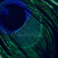 Peacock by NanaPHOTOGRAPHY