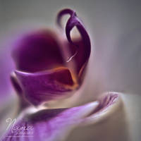 Ultraviolet by NanaPHOTOGRAPHY
