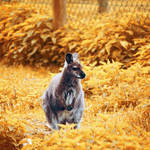 Yellow Kangaroo by NanaPHOTOGRAPHY