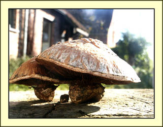 Funky Funghi