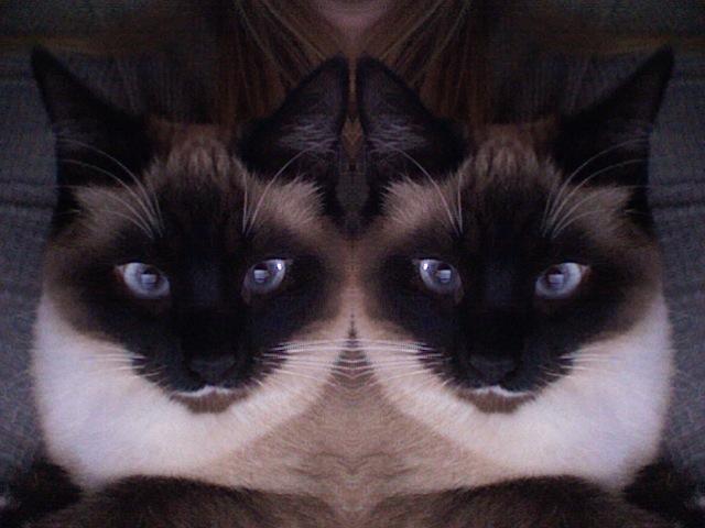 PixieTheCat's Profile Picture