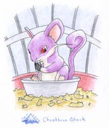 Ratata by Baphita